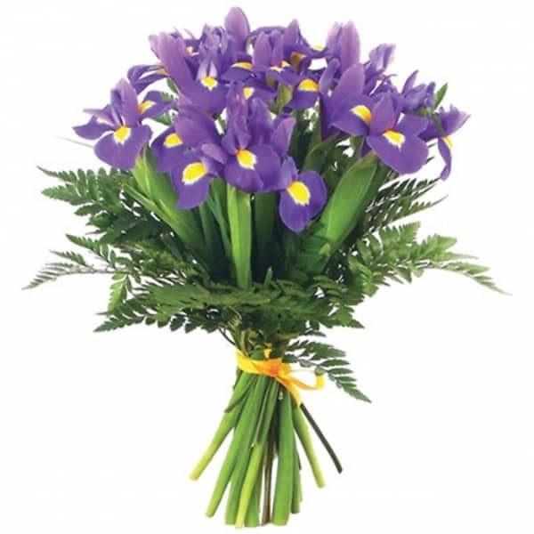 iiris iiris lill 1