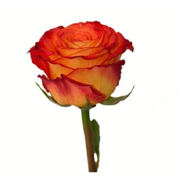 советуют где купить дешевые розы в сочи Рецепты Быстрый медовый